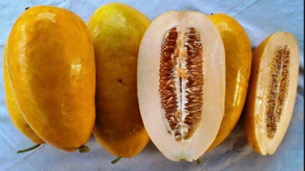 5 Manfaat Timun Suri Untuk Kesehatan Tubuh